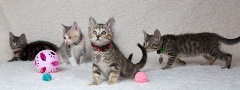 Some Requirements For Fostering Pets
