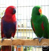 BABY MACAW PARROTS FOR SALE