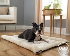 2 in 1 pet bed available at UK Free Ads