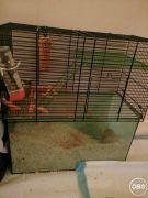 7 Month Old Gerbil Looking for Lovely House at UK Free Classified Ads
