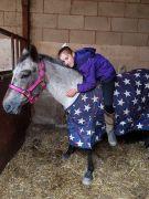 appaloosa mare pony (marge) horse