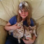 Beautiful and Cute Australian Mist Kittens for Sale UK Free Classified Ads