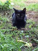 Beautiful Kittens for Sale in Medway UK Free Classified Ads