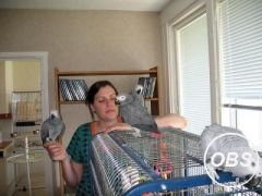 Congo African Grey Parrots For Ready Homes
