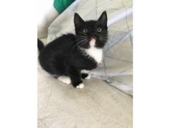 Cute and Lovely Kittens for sale in the UK