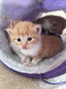 Cute Kittens for Sale Malvern UK Free Classified Ads