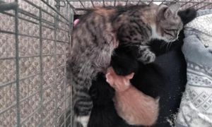 FOUR CUTE KITTENS NEED A NEW HOME AT UK FREE CLASSIFIED ADS