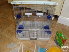 Full Equipment for Budgie for Sale at UK Free Classified Ads