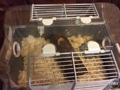 Hamster cage for Sale at UK Free Classified Ads