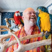Hand Tamed Blue And Gold Macaw Parrots For Sale