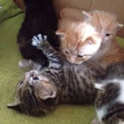 Healthy and Cute Kittens for Sale in Peterborough Area UK Free Classified Ads