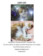 LOST CAT CULLOMPTON at UK Free Ads