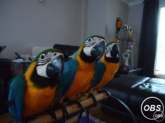 Lovely Macaw Parrots With Cages