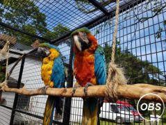 Macaws Parrots for Sale