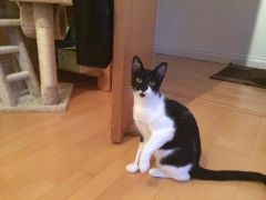 Mitzi Needs a Good Home and Good Owner at UK Free Classified Ads