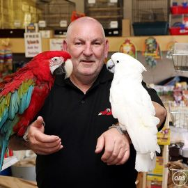 Parrots Available Now To Rehome