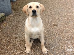 Puppy for Sale at UK Free Classified Ads