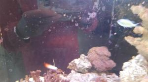 RED SEA REEFER MARINE FISH TANK FOR SALE AT UK FREE CLASSIFIED ADS