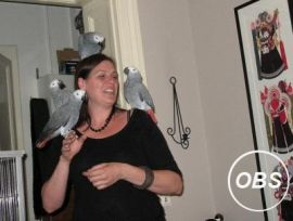 Talking Congo African Grey Parrots 13 Months Old