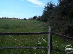 Two and a Half Acres House Stables Outbuildings for Sale at UK Free Classified Ads
