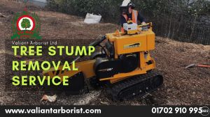 Tree Stump Removal Services in Rochford and Essex