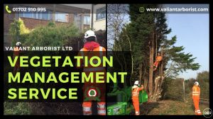 Vegetation Management Services in Rochford and Essex